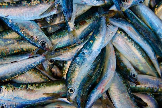 Frischer fisch der sardinen im fischmarkt