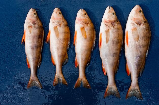 Frischer fisch liegt auf einem dunklen hintergrund, draufsicht. flussfischbarsch zum mittagessen.