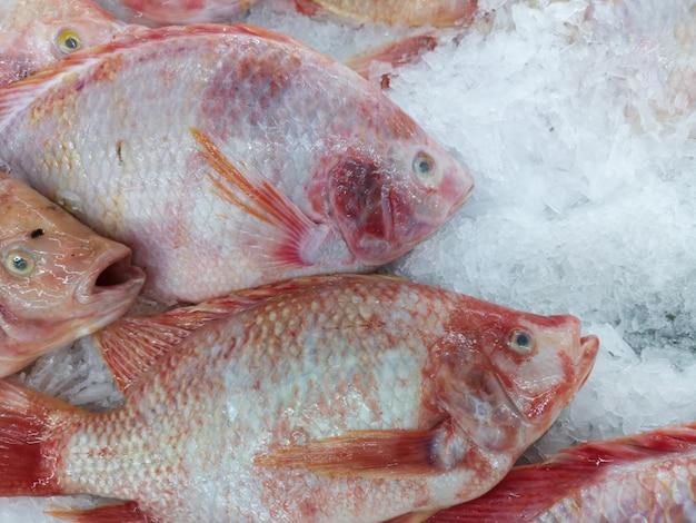 Frischer fisch zum verkauf im markt. weicher fokus.