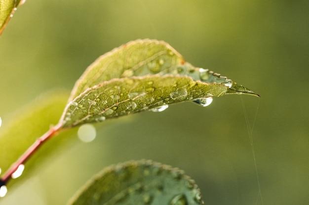 Frischer graswald in den tropfen des morgentaus, die im sonnenlicht funkeln