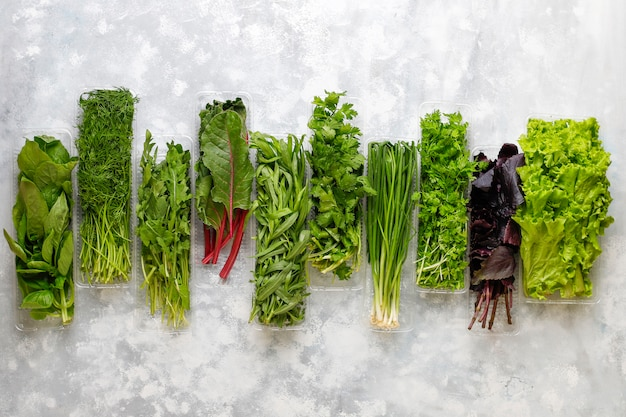 Frischer grünbasilikum, koriander, kopfsalat, purpurroter basilikum, gebirgskoriander, dill, frühlingszwiebel in plastikkästen auf grauem beton