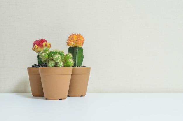 Frischer grüner kaktus der nahaufnahme im braunen plastiktopf für verzieren auf unscharfem hölzernem weißem schreibtisch und wand