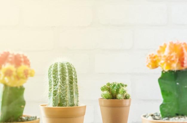 Frischer grüner kaktus der nahaufnahme im braunen plastiktopf für verzieren mit unscharfer gruppe farbkaktus