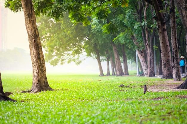 Frischer grüner park in einer stadt gefüllt mit verschmutzung. vachirabenjatas park (rot fai park) in bangkok.