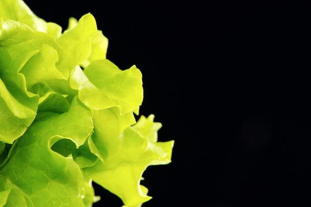 Frischer grüner salat lokalisiert auf schwarzem hintergrund