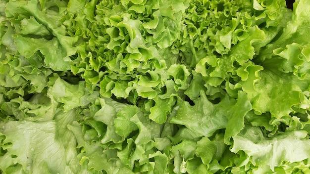 Frischer hellgrüner salat salat nahaufnahme hintergrund