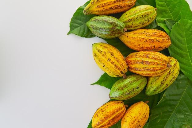 Frischer kakao trägt mit grünem blatt auf weißem hintergrund früchte