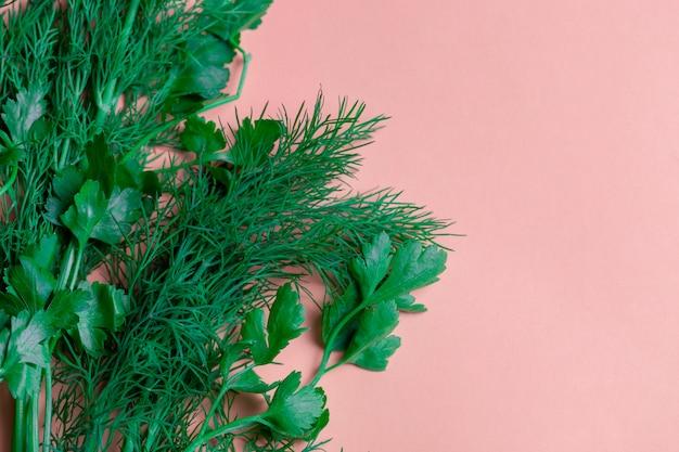 Frischer krautdill, petersilie am korallenroten papierhintergrund. draufsicht platz kopieren.