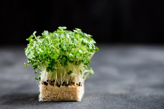 Frischer kressesalat-makroschuß