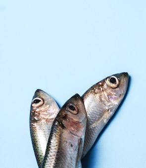 Frischer leckerer fisch auf blau