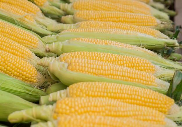 Frischer mais. frische mais im markt. maiskolben zwischen grünen blättern.