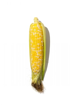 Frischer mais mit blättern