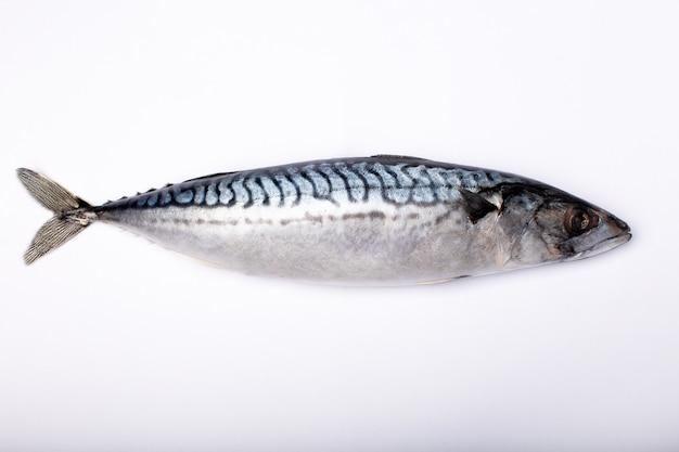 Frischer makrelenfisch isoliert
