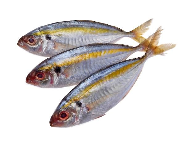 Frischer makrelenfisch lokalisiert auf weißem hintergrund