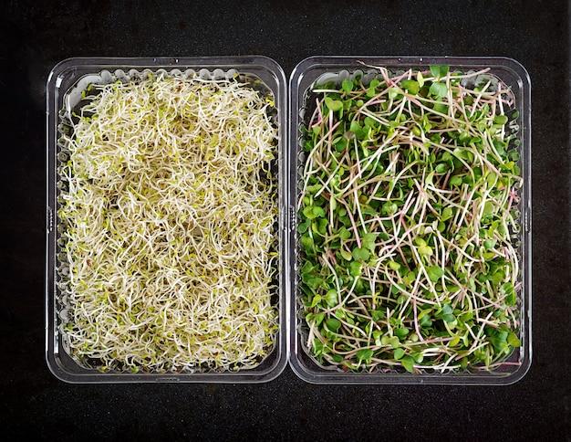 Frischer mischung microgreens salat, draufsicht