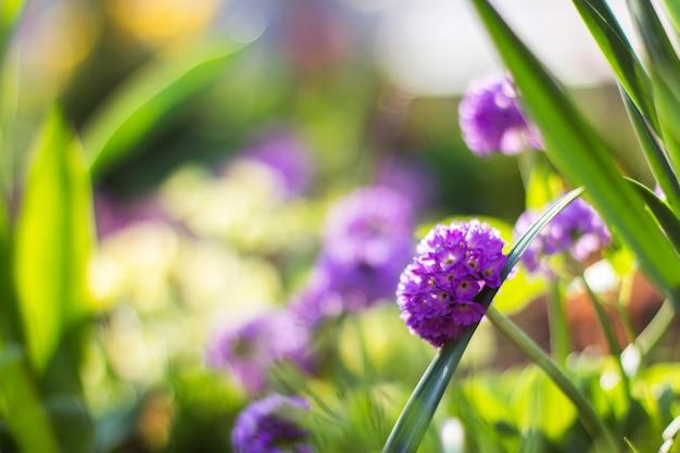 Frischer morgen sonnige sommerblumen und gras auf unscharfem hintergrund, sommerhintergrund, weicher fokus