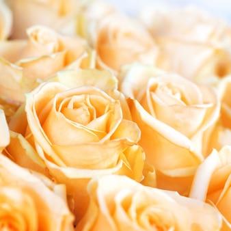 Frischer orangenrosen mit grünem blattnaturfrühlingshintergrund. weichzeichner und bokeh