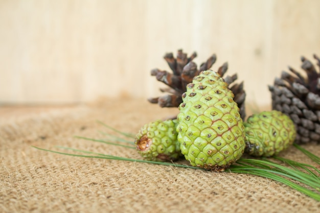 Frischer pinecone für frischen pinecone tee.