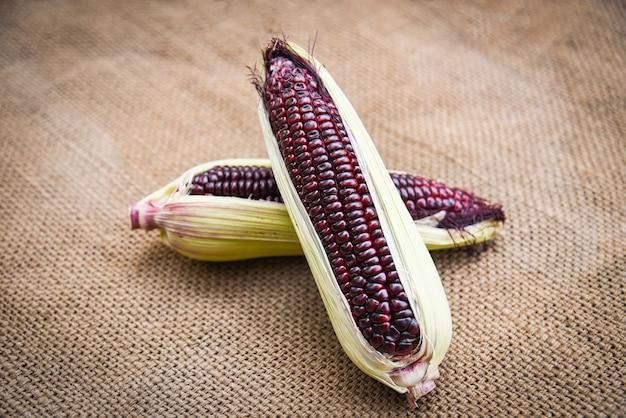 Frischer purpurroter maiskolben auf sack / siam ruby queen oder süßem rotem mais
