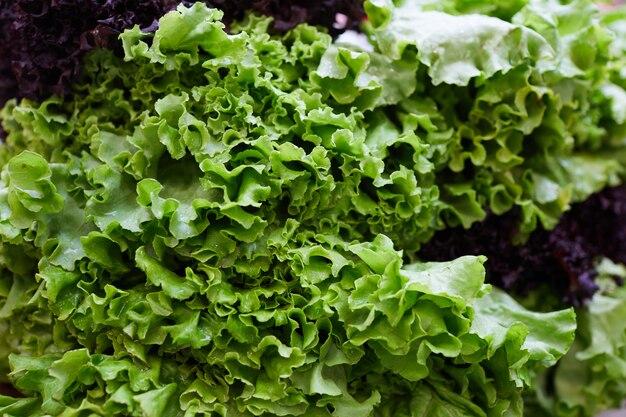 Frischer salat nah oben
