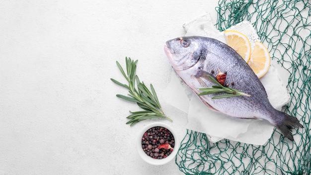 Frischer seebrassenfisch und grüner fischnetzkopierraum