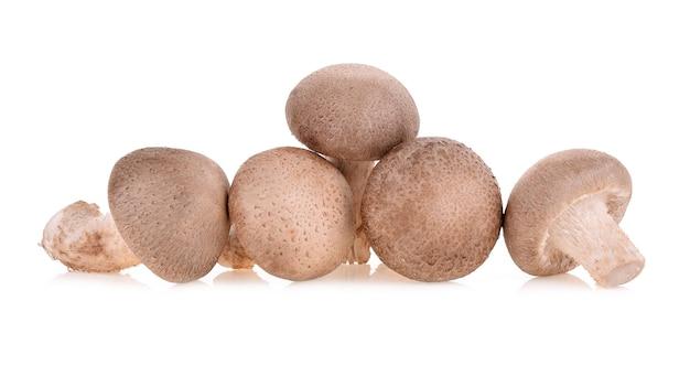 Frischer shiitake-pilz isoliert auf weißem hintergrund.