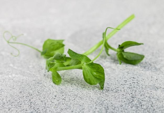 Frischer süßer sprössling der grünen erbse. microgreen
