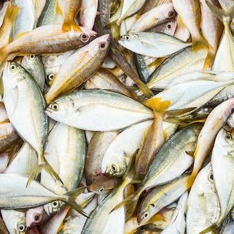 Frischer thunfisch im markt