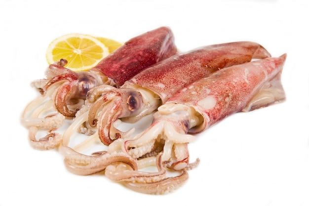 Frischer tintenfisch isoliert