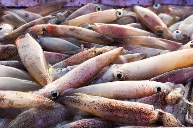 Frischer tintenfisch