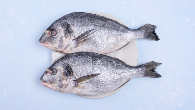 Frischer ungekochter fisch mit meeresfrüchten