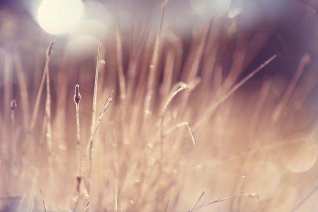Frisches frühlingsgras mit tropfen auf natürlicher defokussierter natur