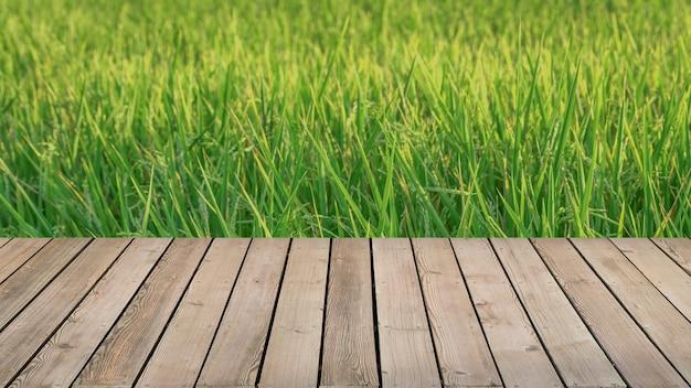 Frisches frühlingsgrünes reisfeld mit holzboden. natürlicher hintergrund der schönheit