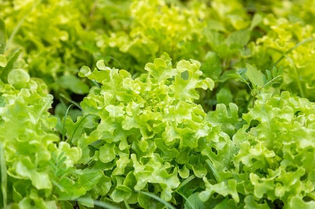 Frisches gemüse auf dem bauernhof zum kochen und salate angebaut