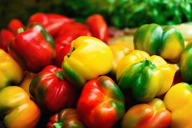 Frisches gemüse rote, gelbe, grüne paprika. essen