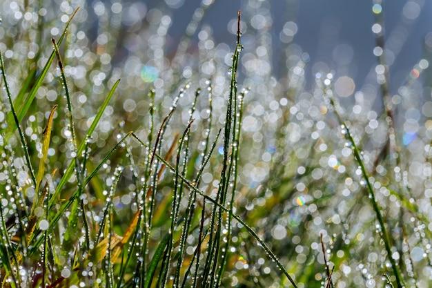 Frisches gras mit tautropfen schließen oben