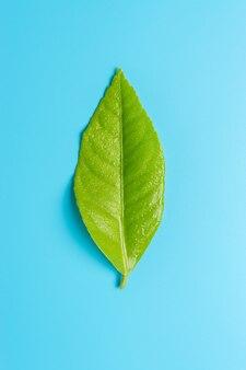 Frisches grünes blatt auf blauem hintergrund