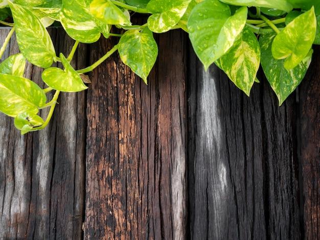 Frisches grünes blatt auf hölzernem hintergrund, kopienraum, draufsicht