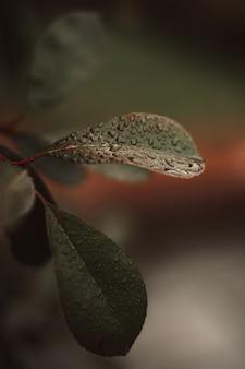 Frisches grünes blatt einer pflanze mit regentropfen, die in der natur wachsen natürlicher hintergrund organische textur