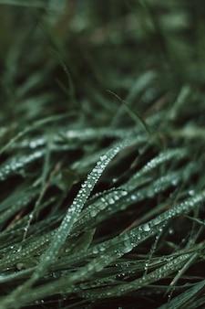 Frisches grünes gras, das in der tierwelt mit rosstropfen nach regen wächst frischpflanzenhintergrund