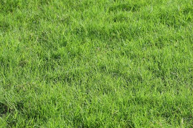 Frisches grünes gras für hintergrund