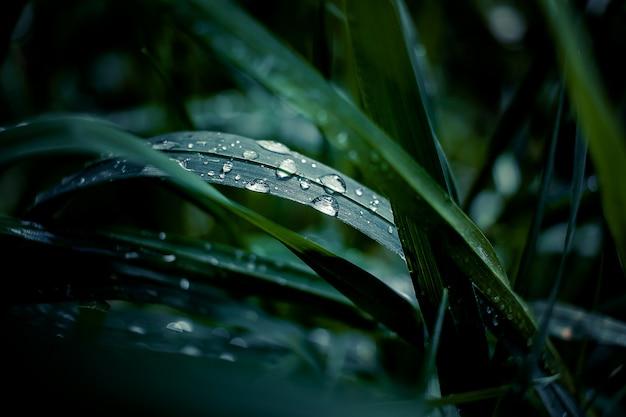 Frisches grünes gras mit tautropfen schließen oben. wassertropfen auf dem frischen gras nach regen. heller morgentau auf dem gras
