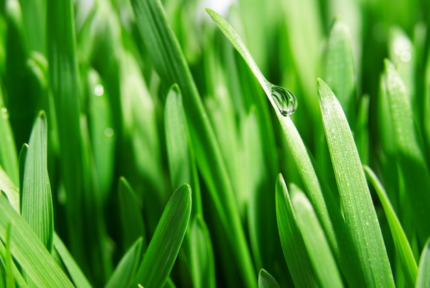 Frisches grünes gras nah oben, selektiver fokus