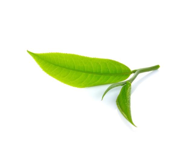 Frisches grünes teeblatt isoliert