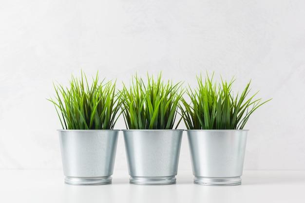 Frisches grünes weizengras im topf