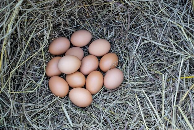 Frisches huhn von bio-eier mit nest, ein stapel von braunen eiern in einem nest