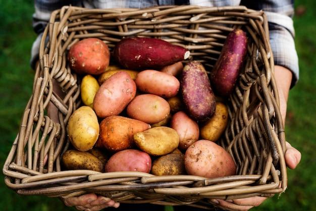 Frisches kartoffelwurzelgemüse