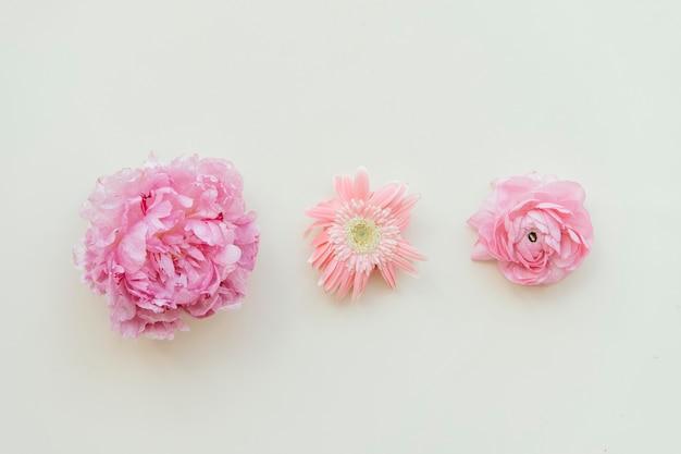 Frisches rosa blumenmuster auf weißem hintergrund
