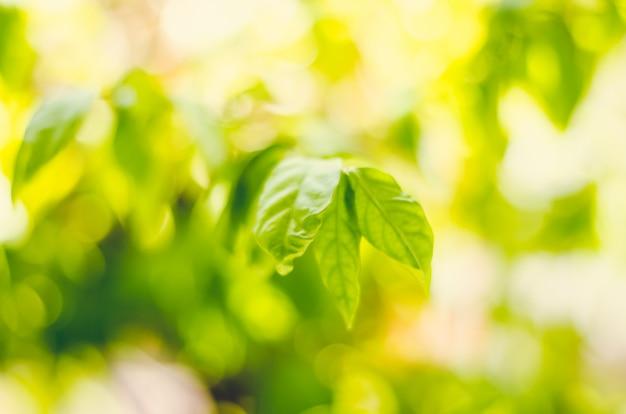 Frischzustand und unschärfegrünblätter auf grünem hintergrund