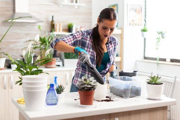 Fröhliche frau, die sich um hausblumen kümmert, die in der küche auf dem tisch sitzen. florist, der blumen in weißem keramiktopf mit schaufel, handschuhen, fruchtbarem boden und blumen für die hausdekoration umpflanzt.